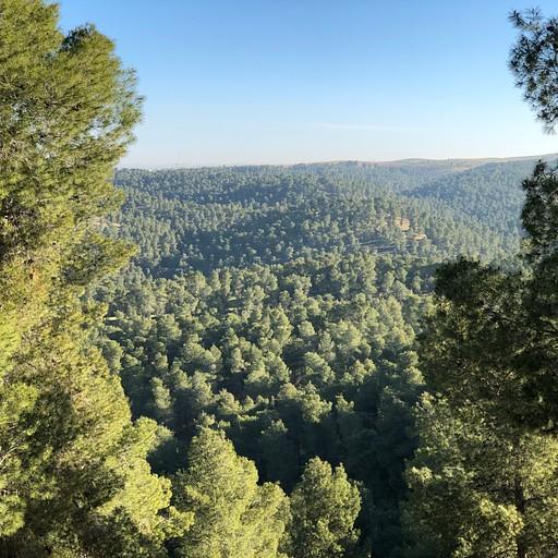 יער יתיר (קליק להגדלה)