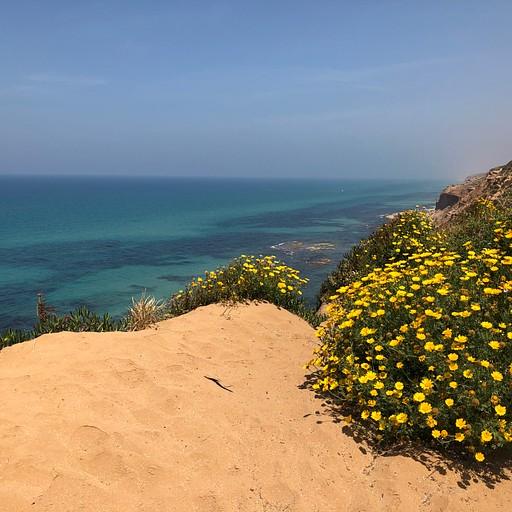 חוף השרון (קליק להגדלה)