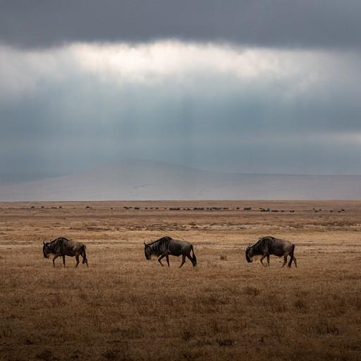 גנו על רקע הזריחה בנגורונגורו