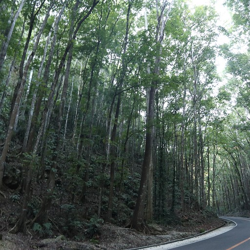 היער המלאכותי