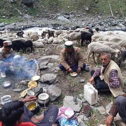 רועי צאן בדרך ללהאול