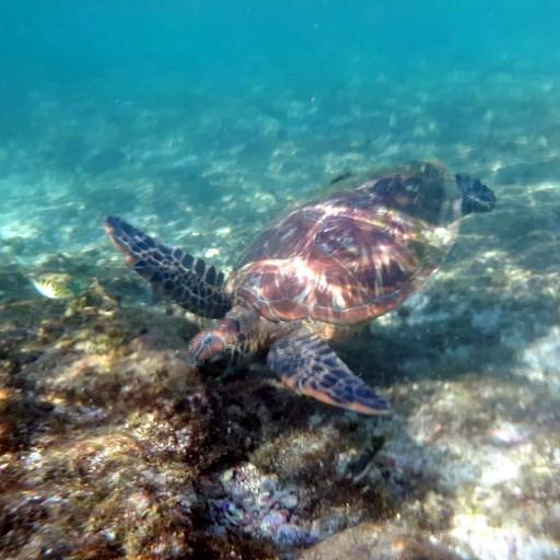 צב הים בשמורת הצבים