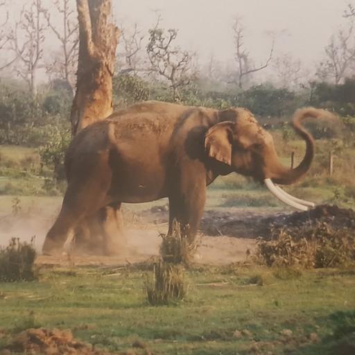 בחוות הפילים בסואהרה