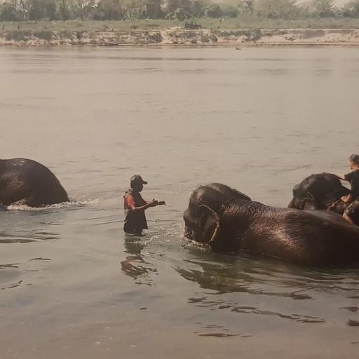 שטיפת פילים בחוות הפילים