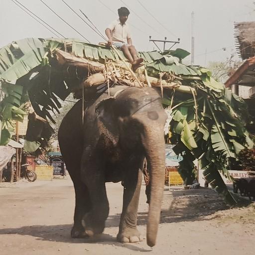פילים - מראה נפוץ ברחובות סואהרה