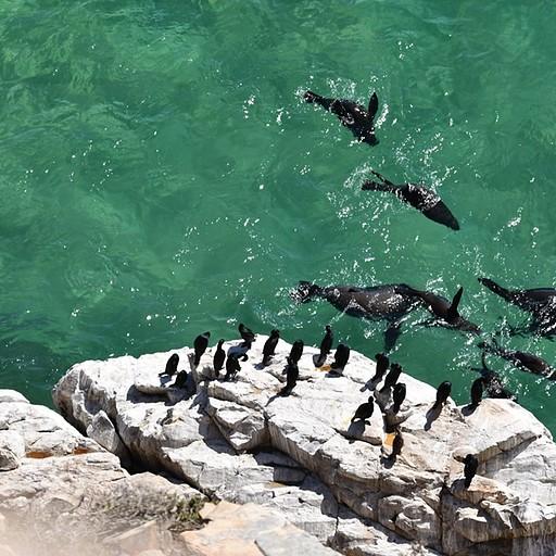 כלבי ים וקורמרנים מנק' התצפית