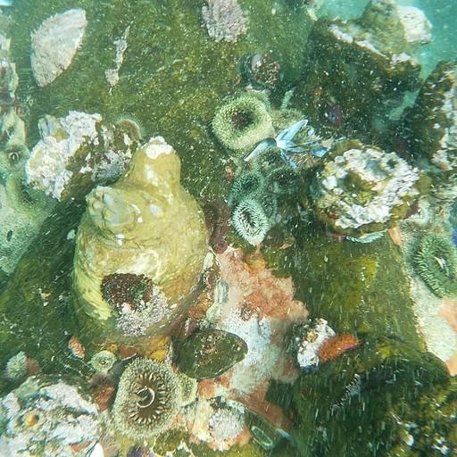 יצורים ימיים מעניינים בשונית