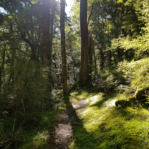 הליכה יפה בבוש