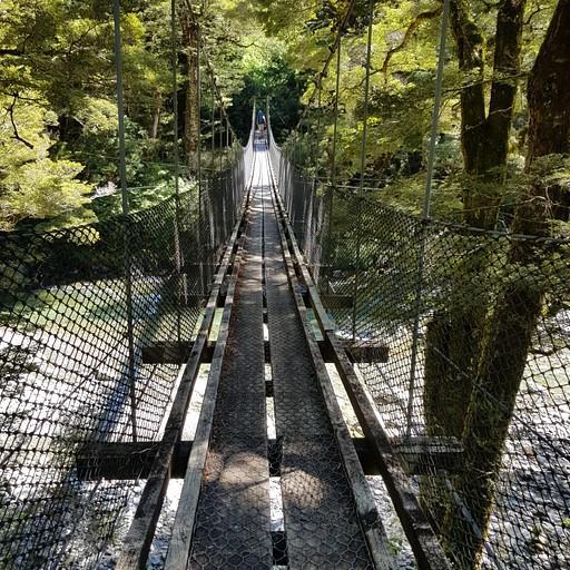 גשר young