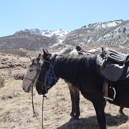 הסוסים באחת ההפסקות בטיול