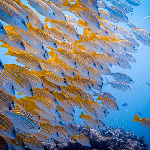 צלילה במנמבה אטול