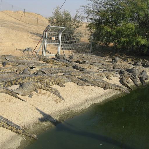 קרוקולוקו - חוות התנינים