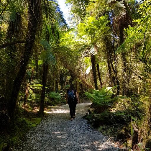 הליכה יפה ביער הטרופי