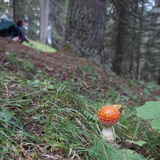 הירידה בתוך היער מבקתת דיבונה