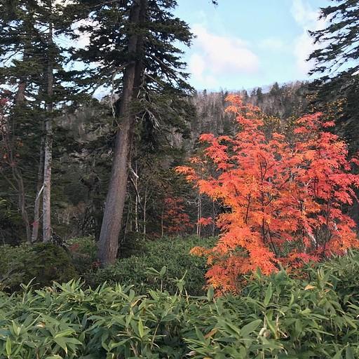 צבעי השלכת על ההר