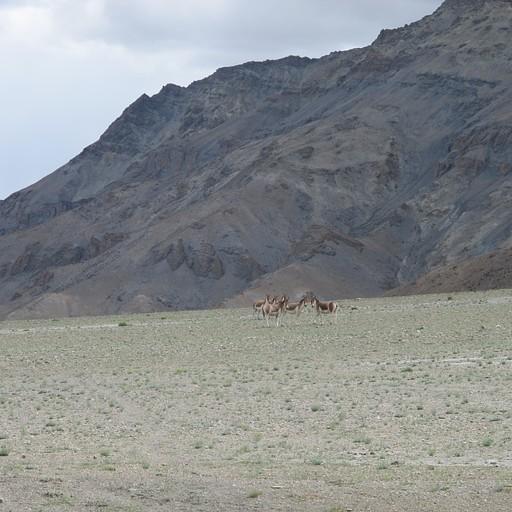 סוסי הפרא