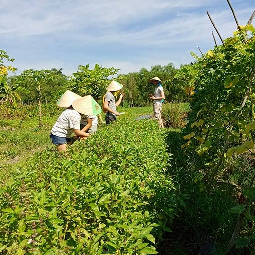 איסוף תבלינים וירקות לשיעור בישול בחווה