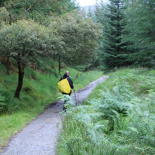 קטע השביל ביער