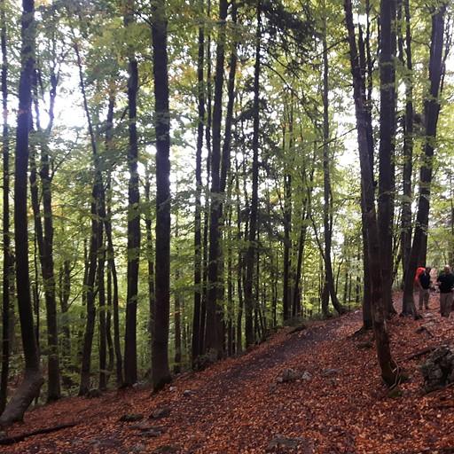 הליכה ביער שמאפיינת את החלק הראשון של היום