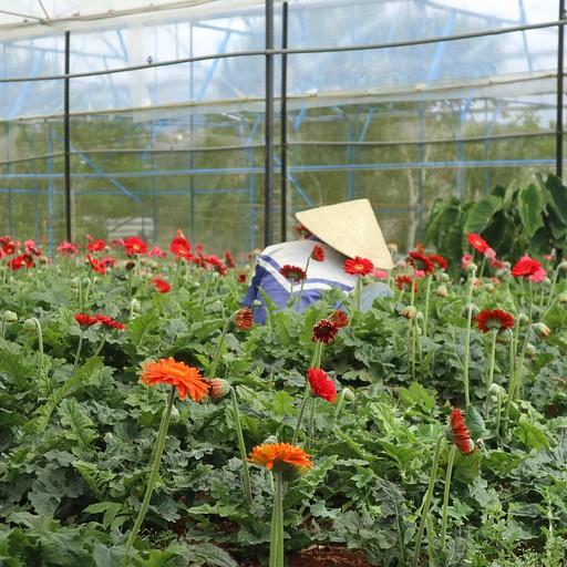 חוות פרחים  - חלק מהסיור של מר חואן
