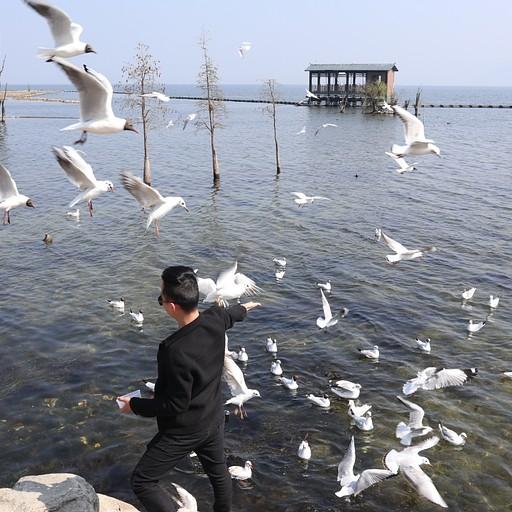 מאכיל ציפורים באגם