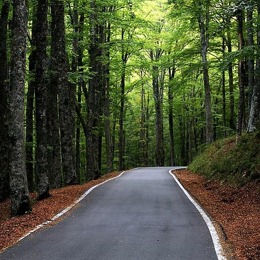 היער העתיק ב-Vallambrosa