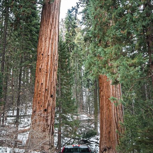 נכנסים לפארק המושלג והעצים מתחיל לגדול...