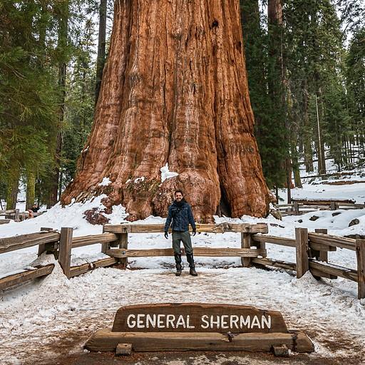 גנרל שרמן, העץ הכי רחב בעולם