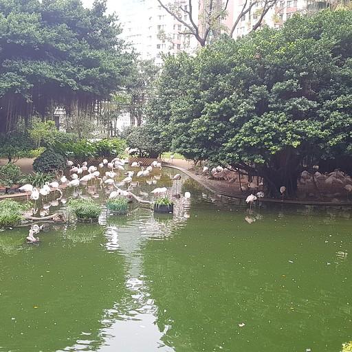 Kowloon park פלמינגו ב