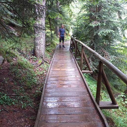 הדרך מתחילה בשביל עץ בתוך היער