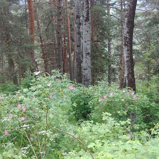 היער והפרחים