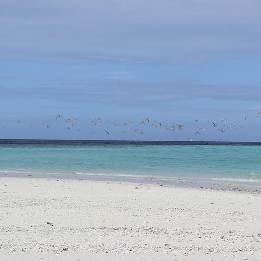 שחפים באי הלבן - White Beach