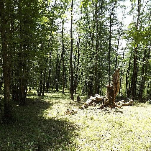 קרחת יער