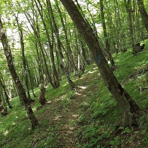 הליכה ביער סבוך
