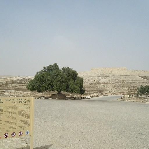 גן לאומי תל ערד
