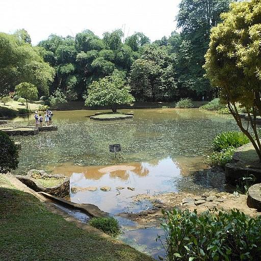 הבריכה בגן הבוטני
