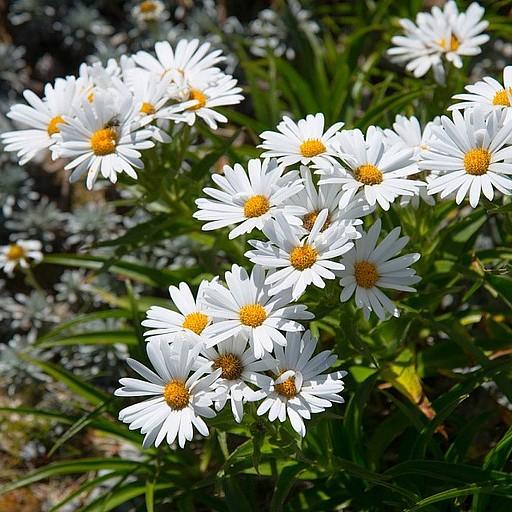 לקראת סוף העליה המון פרחים לבנים