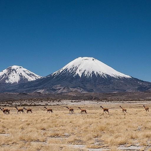 ויקוניות ברקע הרי הגעש