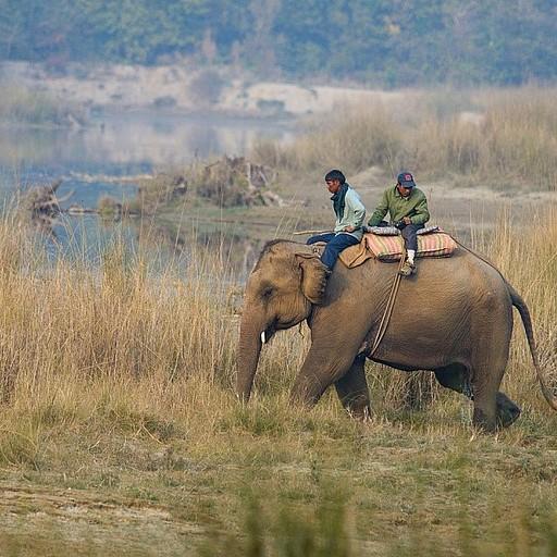 סקר קרנפים שעורכת רשות שמורות הטבע הנפאלית