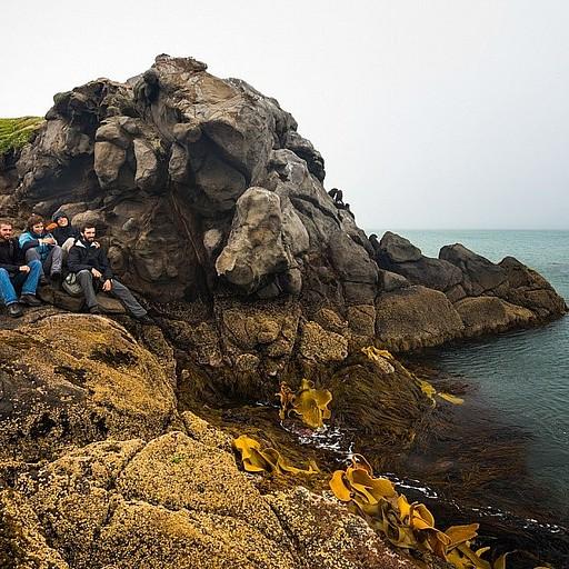 אם תסתכלו טוב, תראו כלבי ים מצד ימין על הסלעים