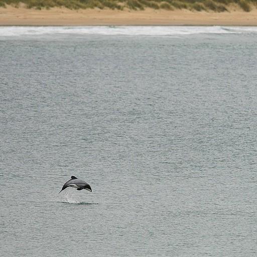 דולפין מסוג Hektor