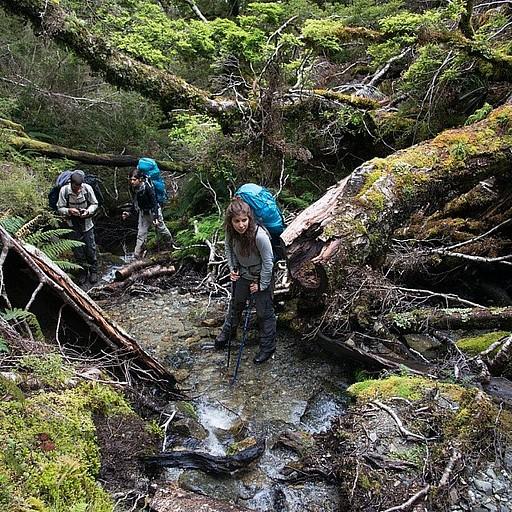 ההליכה ביער - קשה, בוצית ורטובה