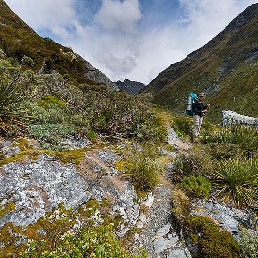 העליה לפאס הריס. בדרך צמחיה ניו זילנדית טיפוסית ויפיפייה