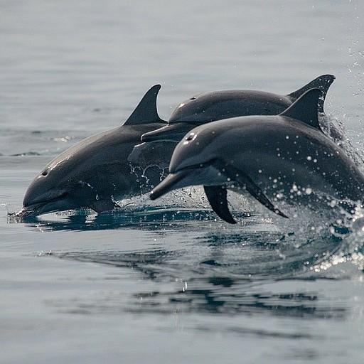 להקות דולפינים ענקיות נמצאות באיזור. אפשר אפילו לראות אותם מהמרפסת!