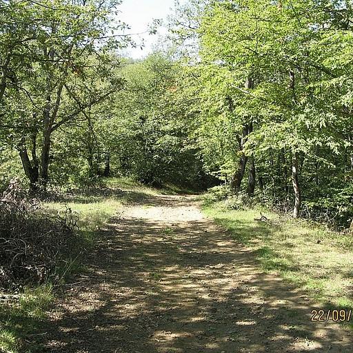השביל ביער