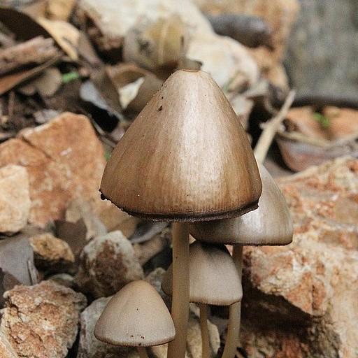 עונת הפטריות