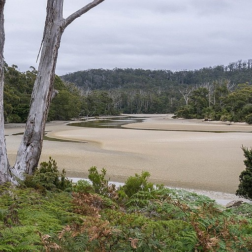 Cockle Creek.