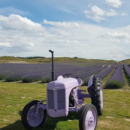 שדה של לונדר , בדרך על כביש 80 יש חוות לונדר , יש אפשרות לקנות מוצרים של לונדר וגלידה טבעית מפרחי לונדר