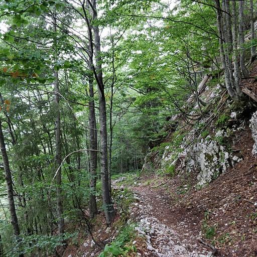 היער הסבוך לקראת סוף הירידה