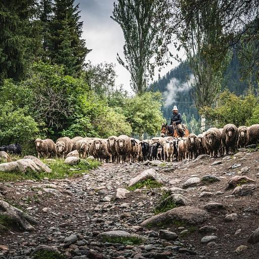 עדר כבשים גדול חולף על פנינו